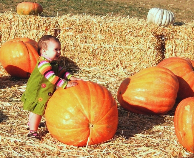 Photo of toddler at Dave's Pumpkin Farm, West of Sacramento by Master Gardener Penny Leff of Yolo County.