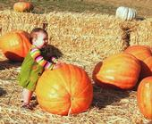 Toddler at Dave's Pumpkin Farm, by Penny Leff of Yolo County
