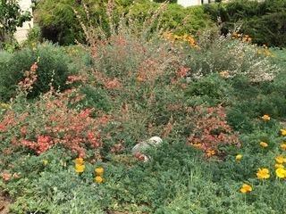 San Bernardino County Master Gardener Loleta Cruse's Drought Tolerant Garden
