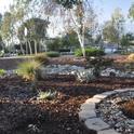 Vikki's Water-Wise Moonlight Garden