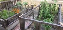 Michael's Cut Flower Garden for UCCE Master Gardeners of San Bernardino County Blog