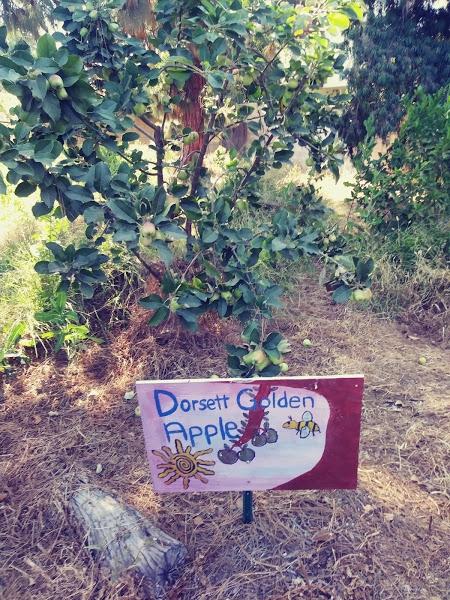Dorsett Golden Apple hand made sign at school