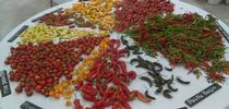 IMAG4054 for UCCE Master Gardeners of San Bernardino County Blog