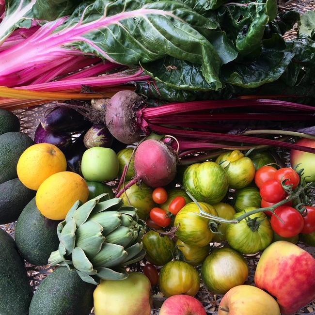 Beautiful Bounty from the Strub Avenue Community Garden