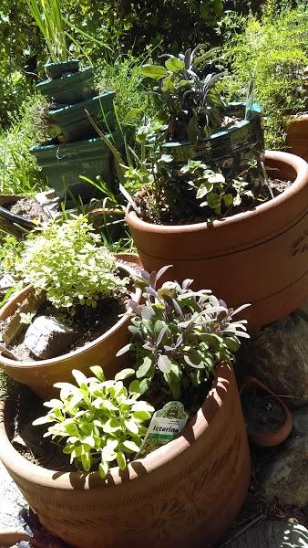 Herbs gardens everywhere