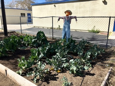 Phelan Elementary Garden - March 2020
