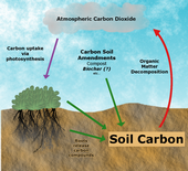 Achieving carbon sequestration by building soil organic matter requires that carbon input rates (green arrows) exceed microbial decomposition of organic matter. Carbon dioxide is absorbed from the atmoshpere during plant photosynthesis (purple arrow). This carbon can enter the soil via plant roots, or when plant residues are added to the soil. Soil amendments containing carbon, such as compost or biochar, can also serve as carbon inputs.ition (red arrow).