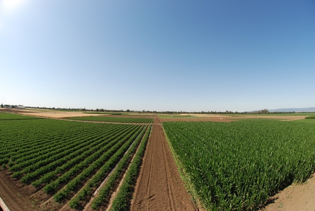 rr field