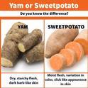 SweetPotato Yam