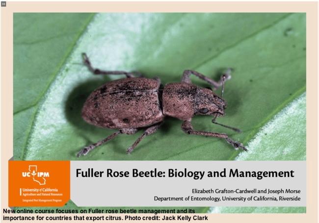 Online Course - Fuller Rose Beetle
