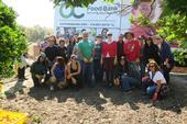 ASICS volunteers to glean citrus at South Coast REC.