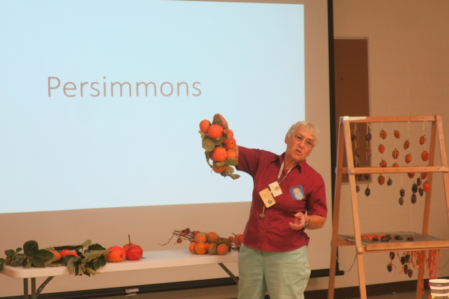Persimmon cultural practices lecture.