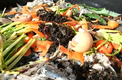 Vermicomposting Composting With Worms Whats Growing On San