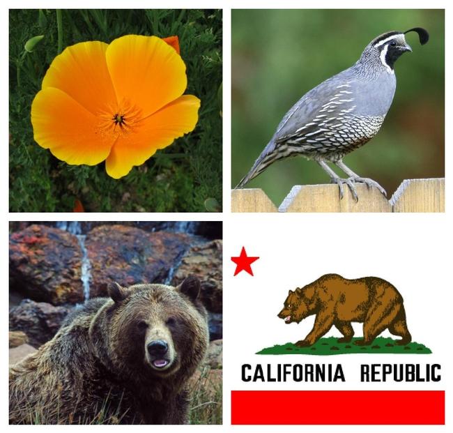 Outlaw-Mom-Booking-Across-the-USA-California-3