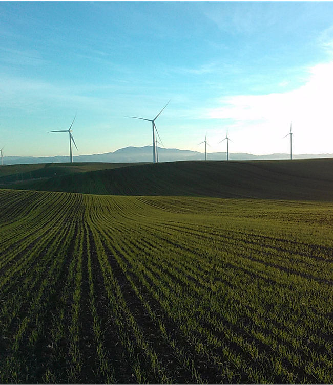 Wheat trials using biosolids in Rio Vista