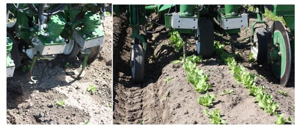 Mechanical Weed Control Tools for Vegetables - Salinas