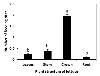 Fig. 4. Springtail feeding injury sites at various parts of the germinated lettuce seedlings.