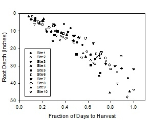 Figure 1. Depth of the deepest broccoli roots over the course of the crop cycle (0.0 = planting to 1.0 harvest)