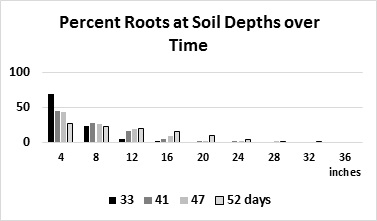 Figure 2. Percent of roots at various depths in the soil on four evaluation dates after germination (mean of three fields)