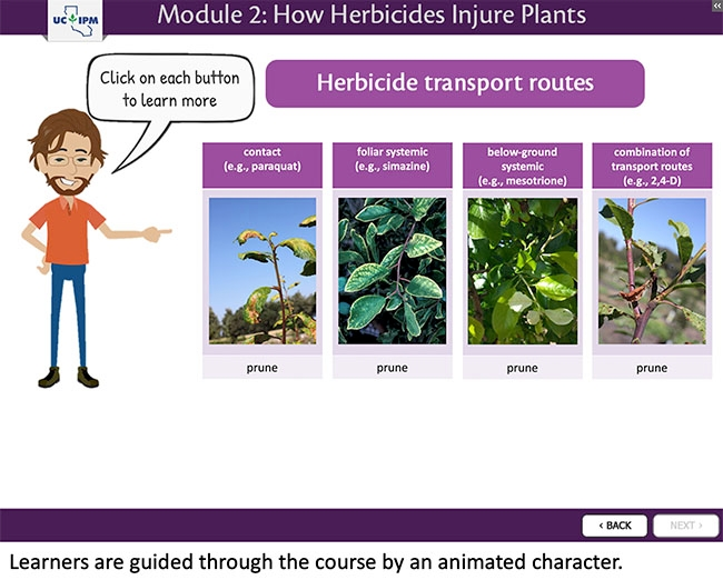 Animated character guiding course