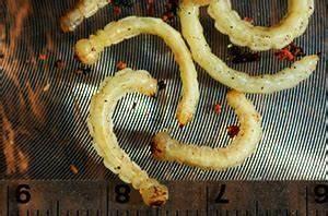 gsob larvae