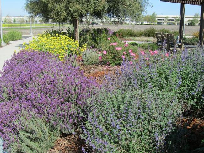 Low water use landscape. (Karrie Reid, UCCE San Joaquin)