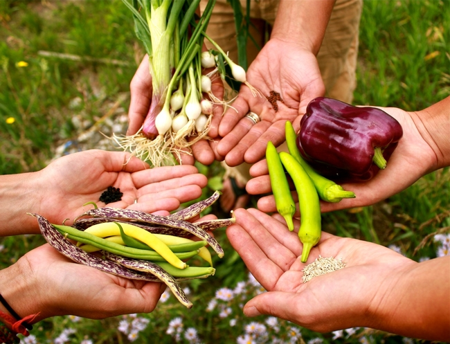 Three pairs of hands holding peppers, shallots, beans, and seeds of each one.