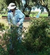 Extension specialist Eric Mussen prunes roses