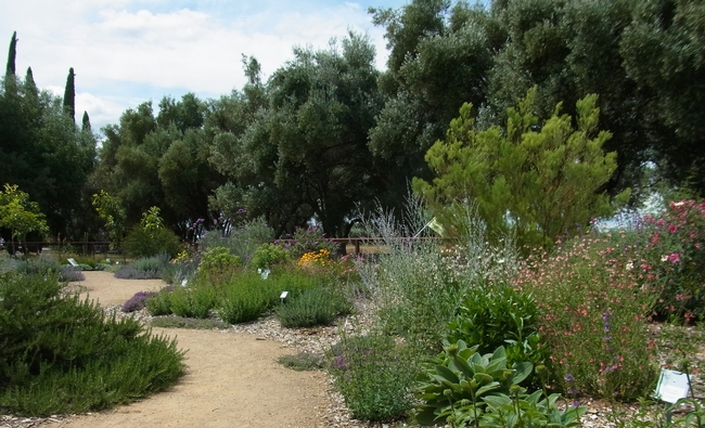 An area of the garden with many different plant species.