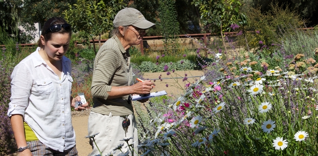 Surveying garden plants for beneficial insects