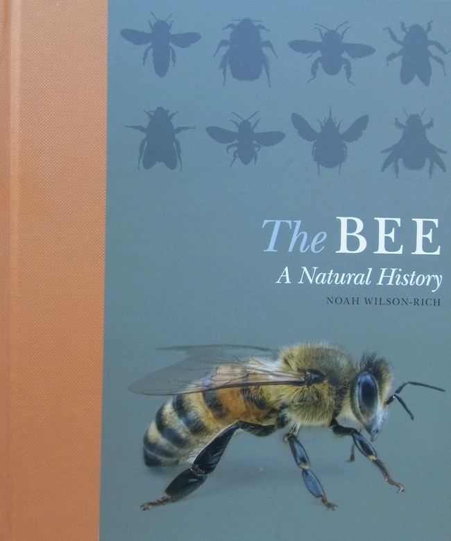 Cover of The Bee A Natural History