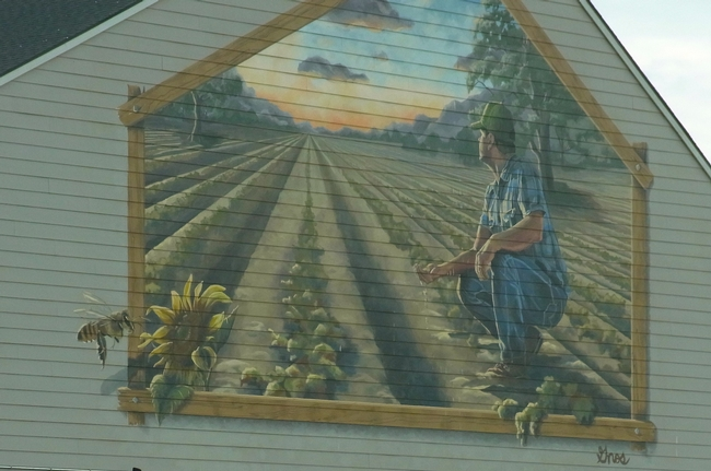 Mural depicting farm field and bee