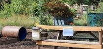 The Junior Bee Gardener Learning Zone for The Bee Gardener Blog
