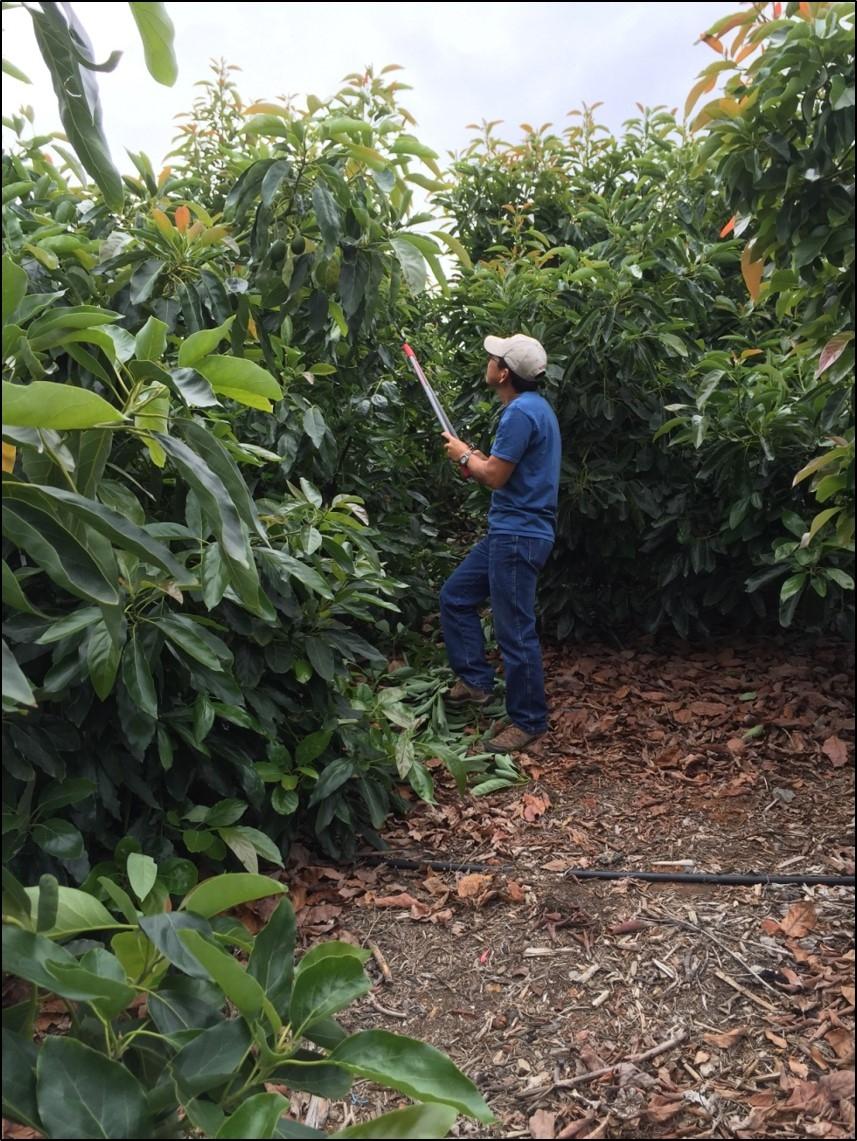 We are San Diego & Riverside County Farm Advisors - Subtropical