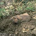 Identification and observation is key to vertebrate pest control.