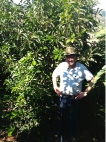 Steve Howerzyl in his high density avocado grove.