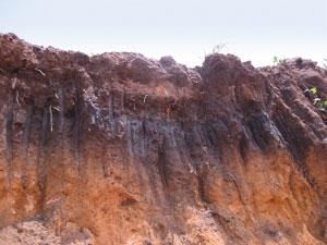 biochar soil