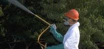 spraying for Topics in Subtropics Blog