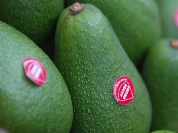 Peruvian avocado