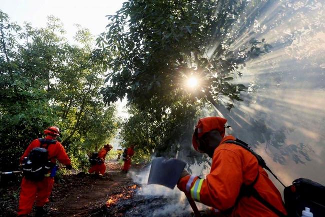 firefighters in avocado grove
