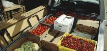 farmers market for Topics in Subtropics Blog