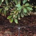 avocado irrigation 2