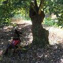 dog identifying lw tree