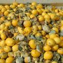 lemon waste