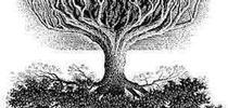 upside down tree for Topics in Subtropics Blog