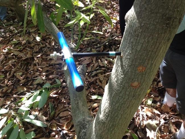 wood coring