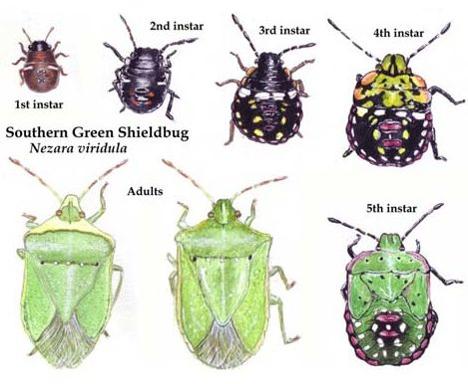 5 instars