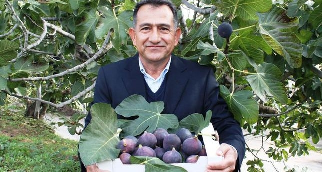 bursa black fig