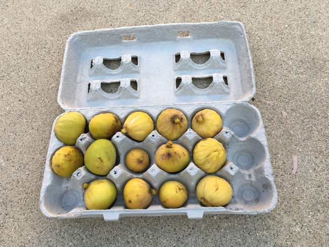 figs in crate
