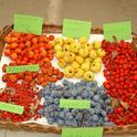 azerolo fruit